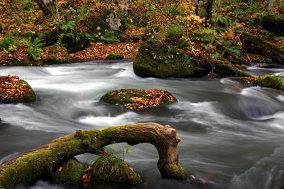 秋之奧入瀨溪